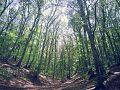 Germia National Park.jpg