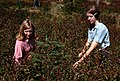 Gifford Pinchot National Forest, huckleberry picking-5 (36777730790).jpg