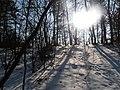 Gnojno-forest-in-winter-180304.jpg