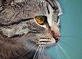 Golden cat eye (Unsplash).jpg