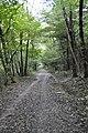 Gozd panovec (3).jpg