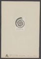 Grammoceras striatus - - Print - Iconographia Zoologica - Special Collections University of Amsterdam - UBAINV0274 005 10 0007.tif