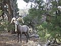 Grand Canyon National Park-Arizona1304.JPG
