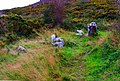Graves of the Leinstermen (1) - geograph.org.uk - 2611166.jpg