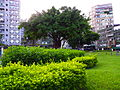Great Banyan in Wanhua Plaza No.406 20100808.JPG