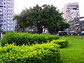 Great Banyan in Wanhua Plaza No.406 20100808.JPG