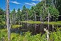 Great Bay National Wildlife Refuge, MA. Credit- Matt Poole-USFWS (11820455173).jpg
