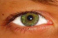 معلومات العين مختصر العين
