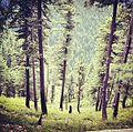 Greenery, forests in shugran.jpg