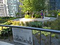 Greywater wetland garden on the Transbay Transit Center, August 2018.JPG