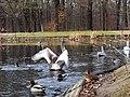 Großer Teich, Großer Garten, Dresden (673).jpg