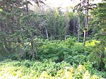 Gryshko Botanical Garden (May 2019) 09.jpg