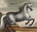 Hästporträtt från cirka 1650, på grå apelkastad häst - Skoklosters slott - 95250.tif