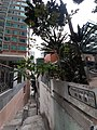 HK 半山區 Mid-levels 般咸道 Bonham Road buildings facade February 2020 SS2 04.jpg