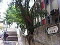 HK Sheung Wan 水池巷 Tank Lane treee Jan-2012.jpg