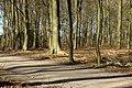 Haagsche Bos - Den Haag - 2011 - panoramio (5).jpg