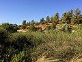 Hadassah View6.JPG