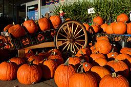 https://upload.wikimedia.org/wikipedia/commons/thumb/7/79/HalloweenPumpkin2.jpg/256px-HalloweenPumpkin2.jpg
