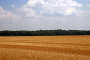 Harvested Wheat 1 (3727629107)