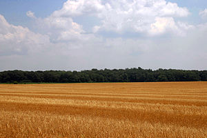 Atlantic coastal plain - Wheat field near Centreville on the Eastern Shore of Maryland, with flat terrain typical of the Atlantic coastal plain