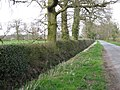 Hedge and ditch, Manor Lane - geograph.org.uk - 1805355.jpg