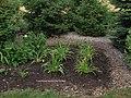 Hemerocallis Map, Birdhouse Garden.jpg