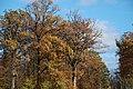 Herbstfarben - panoramio.jpg