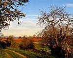 Herbstlandschaft (am Rebhang).jpg