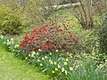 Hergest Croft Gardens - panoramio - PJMarriott (1).jpg
