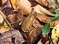 Hidden frog.jpg