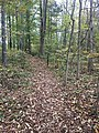 Hiking trail through forest in Confluence Natural Area.jpg