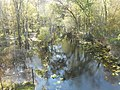 Hillsborough River; SW from FL 39 Bridge.JPG