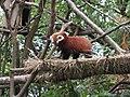Himalayan Zoo, Darjeeling (7168735063).jpg