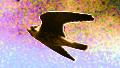 Hobby (Falco subbuteo) (8) transparent.png