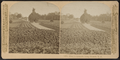 Hoey's Grounds, Long Branch, N.J, from Robert N. Dennis collection of stereoscopic views 3.png