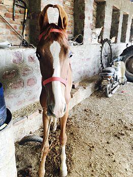Horse baby.jpg