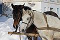 Horses closeup 2012 G1.jpg