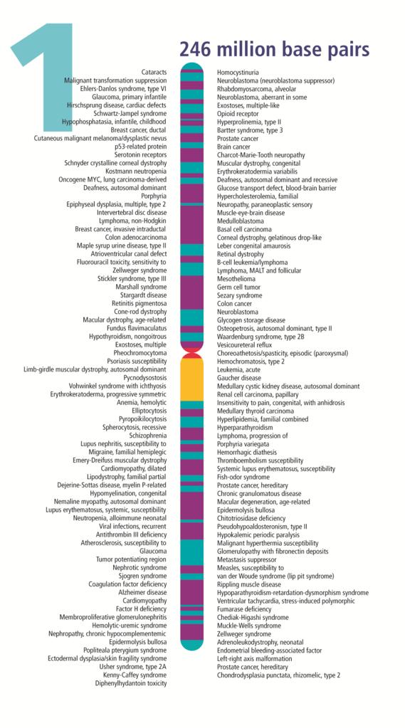 Filehuman Chromosome 01 From Gene Gateway With Labelg Wikipedia