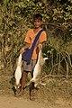 Hunting hare Lepus nigricollis MG 5312 07.jpg