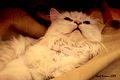 I feel sleepy 3 (2954528014).jpg