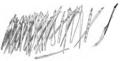 Illustration Schwob moeurs des diurnales page177.PNG