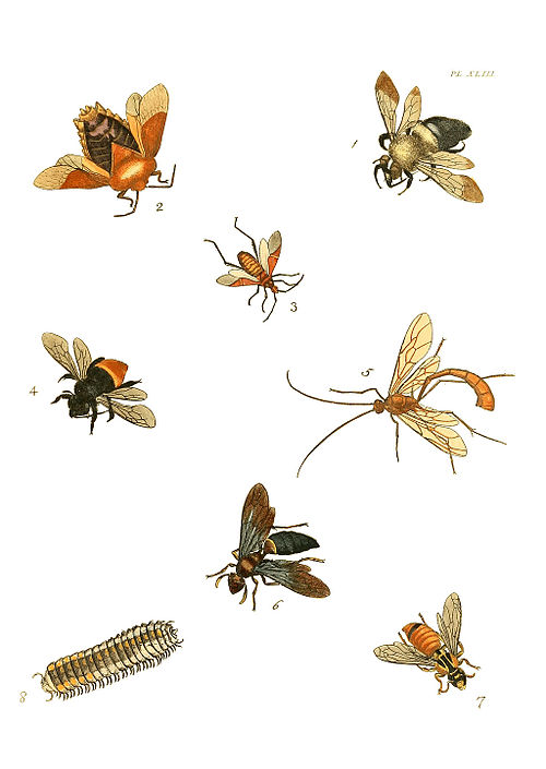 An Instant Guide to Insects: The Most Familiar Species of North American Insects Described and Illus