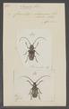 Inesida - Print - Iconographia Zoologica - Special Collections University of Amsterdam - UBAINV0274 034 09 0017.tif