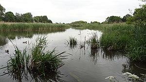 Ingrebourne Marshes - Berwick Pond