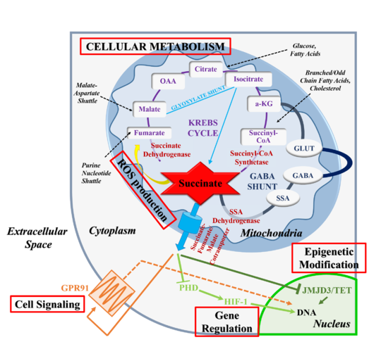 intracellular metabolic processes