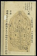 Internal visualisation chart; Various organs, back view Wellcome L0038696.jpg