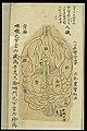 Internal visualisation chart; Various organs, back view Wellcome L0038696.jpg