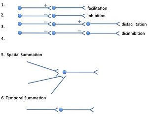 Summation (neurophysiology) - Basic ways that neurons can interact with each other when converting input to output
