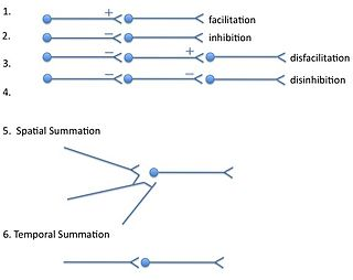 Summation (neurophysiology)