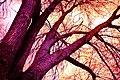 Isolation Tree-2020 Pandemic.jpg